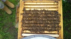 Bienenstocketage von oben