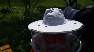 muntere Bienen auf flotter Biene 8-)