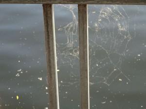 Spinnennetz Pollen