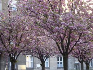 rosa Rathaus
